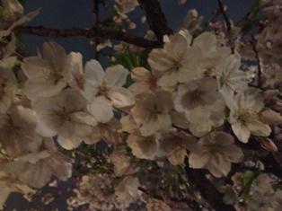 spring 025.jpg
